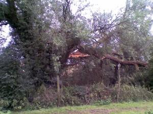 Broken Willow #1