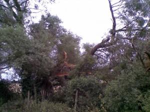 Broken Willow #2